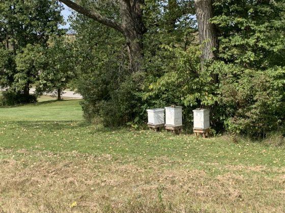 Janeta's Bee Hives